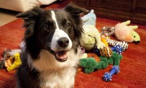 HORIZON - THE SECRET LIFE OF THE DOG