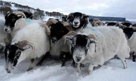 Winter weather - Scotland