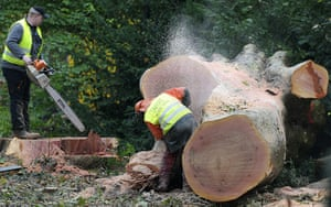 Stuttgart 21 Protest: Forest workers are sawing the trunk of a cut tree in Stuttgart