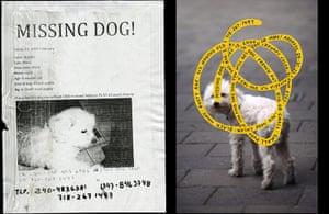 Cardon Copy: Cardon Copy, missing dog flier
