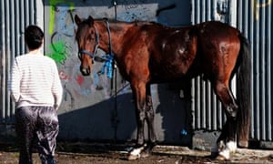 A horse is tied to a doorway in Ballymun, Dublin