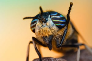 BUG Photography: A horse fly