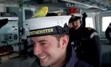 Budgie on naval frigate