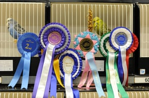 Budgerigar show: Budgerigar Society's 2010 World Championship Show at the Dome, Doncaster