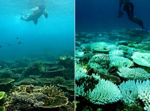 UNEP Report: bleaching coral