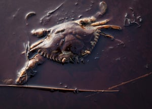 UNEP Report: A dead crab sits among the oil from the Deepwater Horizon oil spill