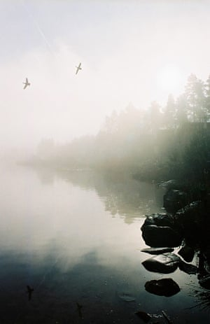In pictures: moody: ducks rising through the mist
