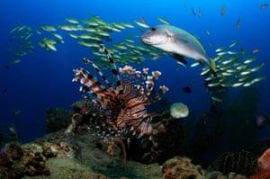 Marine Biodiversity: Timor-Leste Dive Photo Contest's Photos