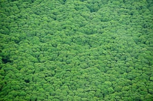 week in wildlife: rainforest canopy of Sungai Sembilang National Park