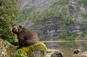 Great Bear Rainforest: iLCP RAVE of the Great Bear Rainforest in British Columbia, Canada