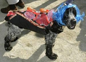 Halloween Dog Parade: Annual Halloween Dog Parade