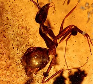 Amber: amber with ant2