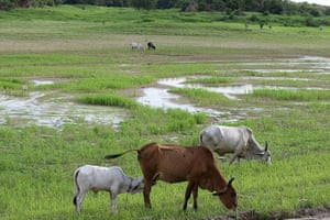 Amazonia drought: lake Praquequara on the outskirts of Manaus, Brazil