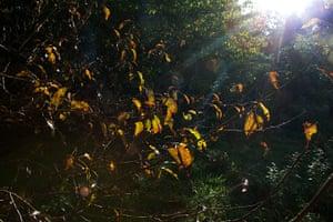 Camera Club: Autumn scenes in a forest in Hoxne, Suffolk