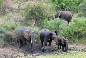 Elephant v Crocodile: 1 The elephants at the waterhole