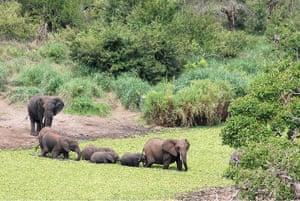 Elephant v Crocodile: 5 Panic over, and the crocodile has vanished