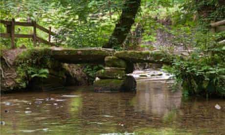Cardinham Woods in Cornwall