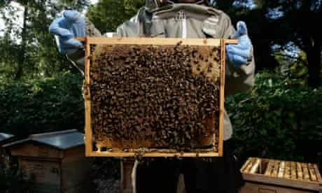 Bees in a honeycomb whilst beekeeping in London's Regent Park