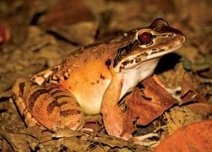 Biodiversity: Wildlife of the UK Overseas Territories