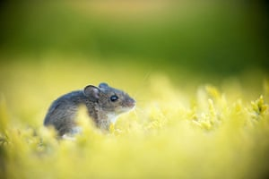 British Wildlife: British Wildlife Photography Awards