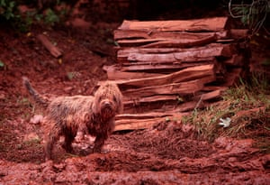 Toxic sludge Hungary: A pet dog covered in toxic mud