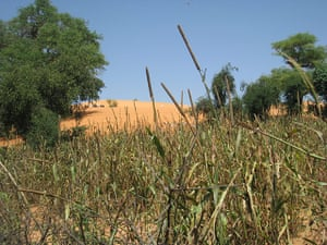 MDG Mali: Desertification on the outskirts of the town of Annakila