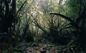 Prix Pictet: Thomas Struth : Yakushima, Japan from the series Paradise,
