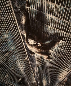 Dino Di Laurentiis: King Kong, the 1976 remake, directed by John Guillermin