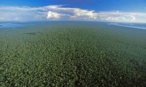 The Amazon Rainforest near Nova Olinda