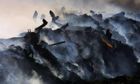 Cattle are culled and burned in response to an outbreak of foot and mouth disease