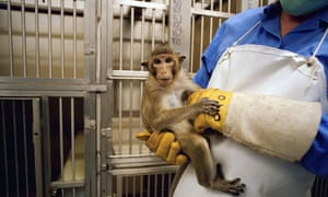 A monkey inside Huntingdon Life Sciences