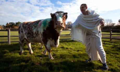 The New Gokul Farm near Watford where they keep happy cattle.