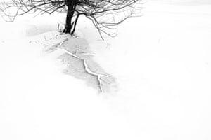 GDT: 2010 European Wildlife Photographer