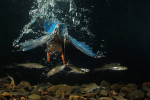 GDT:  European Wildlife Photographer of the Year 2010