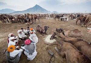 Pushkar camel fair: Jagdish Rabari eat breakfast alongside a few of their 70 camels