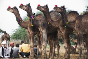 Pushkar camel fair: Buyers typically come from across the northwestern states of India