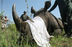 rhinoceros : Anti-Poaching Campaign Launched In Kruger National Park