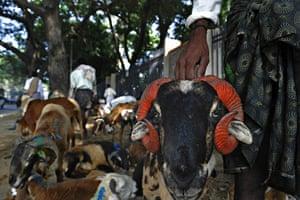 Eid al-Adha: An Indian shepherd sells his livestock on a roadside  in Bangalore