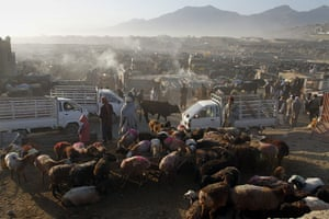 Eid al-Adha: Afghans wait for customers at the animal market on the eve of Eid