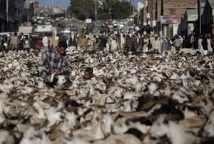 Eid al-Adha: A Yemeni boy helps a customer to pick a goat at a market in Sanaa, Yemen