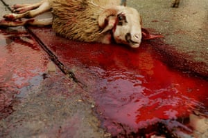 Eid al-Adha: A slaughtered sheep lays on the ground in the town of Kosovo Polje
