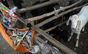 Eid al-Adha: A baby sleeps in an hammock next to animals at a market in Mumbai