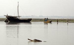 weird mammals: Ganges River dolphin