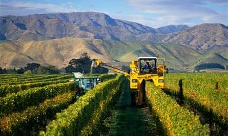 A vineyard in Marlborough New Zealand