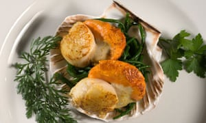 Queen scallops served in shell