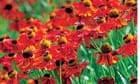 Gardens: Winter Pain, summer gain