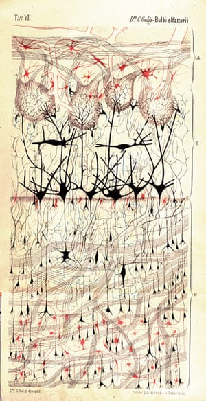 Portraits of the mind: Drawing of a dog's olfactory bulb
