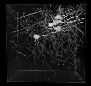 Portraits of the mind: Five neurons automatically reconstructed by a computer