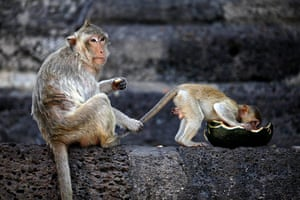 24 hours in pictures:  Monkey Buffet Festival