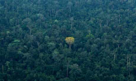 Trees forest, Sumatra island, Indonesia